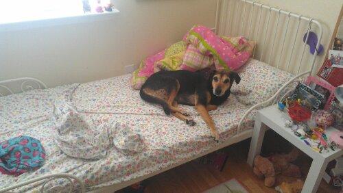 dogs sleeping in children's bed